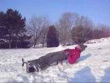 Session Snow-skim et luge