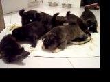 Premier repas des bébés de Bagheera, 25 jours