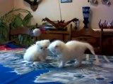 bébés Roxane le 10 lanvier 2010