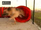 Educateur canin, education canine, dressage pour chien