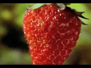 "CERRONE SYMPHONY- "" Impressions"" (Fan Video made by Jon)"