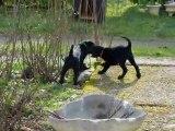 ptit chiens yoko et grope(s)