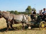 Les chevaux bretons