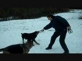 Les chiens du refuges des Amis des Bêtes à Aix les Bains