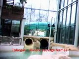 Center parcs - Voyage dans la bulle des ailettes