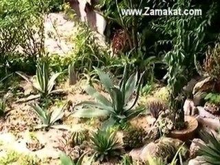 Кактуси - Градина Замъкът