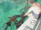 SeaRay 430 Sport Fishing FUN!