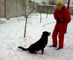 Nowy wybieg dla psów w schronisku przy ul. Bukowskiej