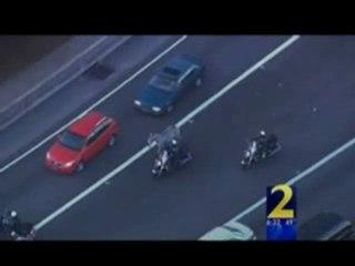 Atlanta: Zebra Fugge Dal Circo e Paralizza L'Autostrada
