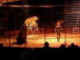 12-02-2010: Cirque, les tigres et la tigresse...