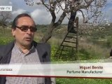 Video of the day | Majorca almonds in bloom | Deutsche Welle