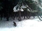 Balade sous la neige - février 2010