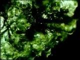 Midnight Black Earth