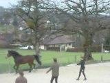 Mon cheval en saut en liberté