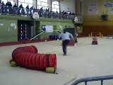 dixie concours d'agility audun le roman 21/02/2010 OPEN