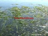 Amazing Lake Weed Cutter and Pond Weed Cutter