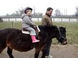 Balade à poney avec papi&mamie Baby Fév.10