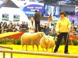 Sia 2010 : entrée des moutons sur le ring