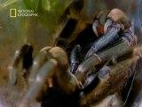 National Geographic  Le Pouvoir Des Araignees1