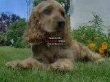 dallas(ptits chien)