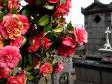 Mon amie la rose. Rita Tabbakh.