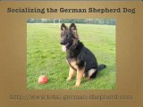 German Shepherd Socialization - Socialize Your GSD
