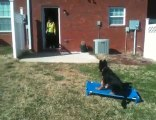 Sit Means Sit - Douglasville Dog Obedience Client - Angel