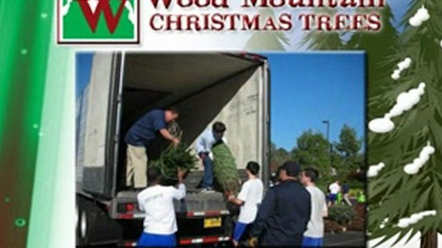 Wood Mountain Christmas Trees - Christmas Tree Fundraising