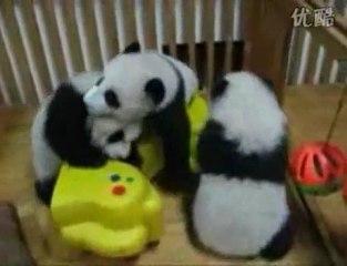 Catch de pandas