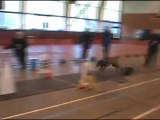 Flyball Les Dingos de Saulx 14-02-10 U2
