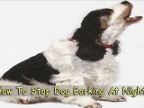 Learn How to Stop Dog Barking at Night
