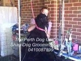 Perth Dog Grooming - Shag Dog Grooming Services - Grooming A