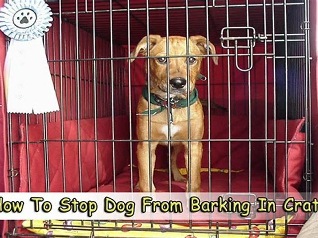 Learn How To Stop Dog From Barking In Crate