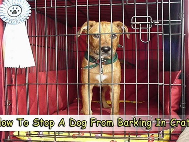 Learn How To Stop A Dog From Barking In Crate