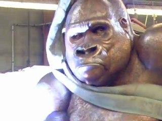 Soudure Gorille Jacquesson