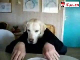 Perro con brazos