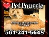 Wheaten, Boca Dog Groomer, Pet Pourrie! Poodle, Pet Groomer