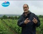 Vigne - Comment choisir son cépage - Viticulture