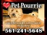 Pet & Dog Grooming Boca, Pet Pourrie, Boca Raton Dog Groome