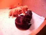 Bébés Cara X Juju 3 semaines