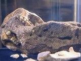 Pre-human skeletons offer evolutionary clues