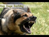 Stop Dogs Barking-Top 6 Tips On How to Stop Dogs Barking