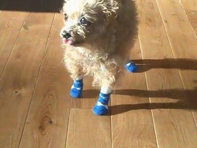 Dog Sock Review – Older Dogs Get a Grip