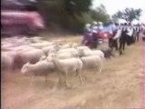 Berger et ses Moutons au Festival Rétro
