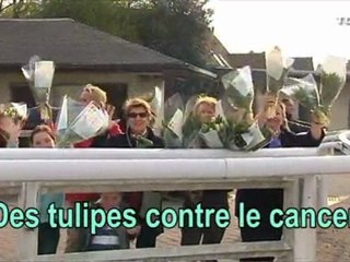 Des-tulipes-contre-le-cancer-2010-b