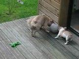 les ptits boulis jouent au ballon avec Maman