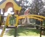 Les zamours au parc