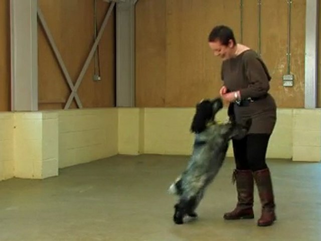 Dog Training Made Easy : Sit