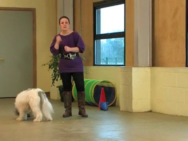 Dog Training Made Easy: Teach your dog to fetch