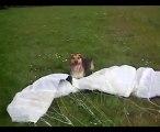 django vs kite - Accident Crash  2010 - gag